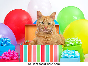 Orange tabby cat popping out of a birthday box