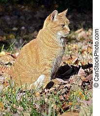 Orange Tabby Cat Sitting in Fall Leaves