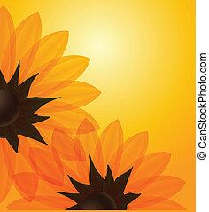 orange, tournesols, fond