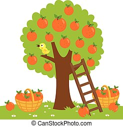 Orange tree harvesting - Vector Illustration of an orange...