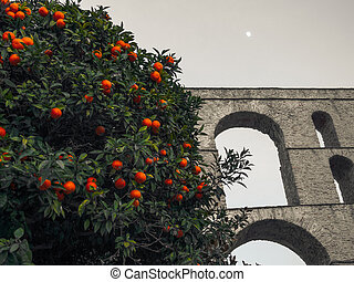 Orange tree in front of the ancient Roman aqueduct