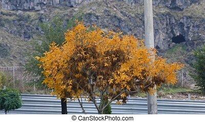 Orange Tree in the City