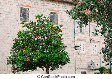 Orange Tree near the stone house