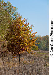 Orange trees in the golden autumn park
