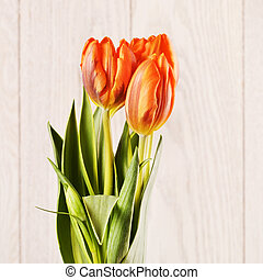 Orange Tulip Flowers