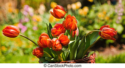 Orange tulips in basket