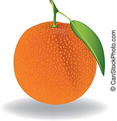 Orange. Vector