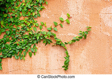 orange wall with ivy plant