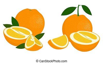 Orange whole, half and slice of orange with leaves on white background. Citrus fruit. Vector illustration of oranges on white background.
