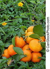 Orange with green leaf