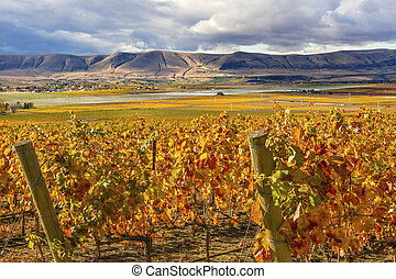 Orange Yellow Leaves Vines Rows Grapes Fall Vineyards Red ...