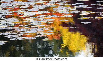 Orange Yellow Lily Pads Water Reflections Van Dusen Gardens