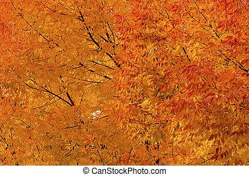Orange Yellow Maple Leaves Fall Colors Leavenworth Washington