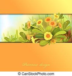 Orange yellow primroses - Spring summer flowers. Yellow ...