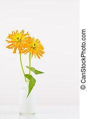 Orange zinnia flowers in vase