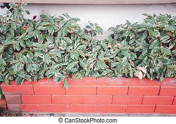oranger, brique, jardin, décoration, plante