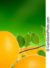 Oranges with Green Leaves on Green Background