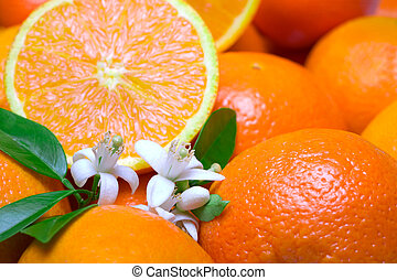 oranges with leafs and blossom in a white background