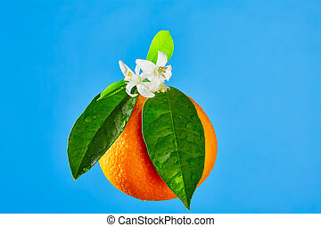 Oranges with orange blossom flowers on blue