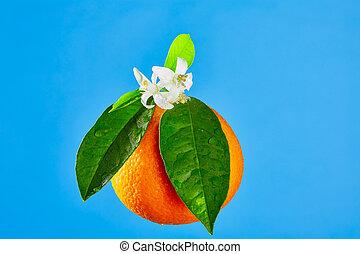 Oranges with orange blossom flowers on blue