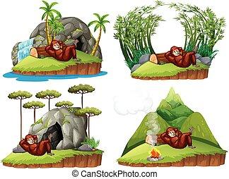 Orangutan in four different scene