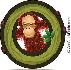 Orangutan with alphabet O