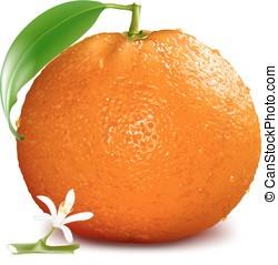 oranje bloesem, bladeren