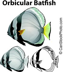 Orbicular batfish in three sketches illustration