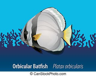 Orbicular batfish under the sea illustration