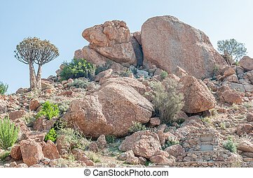 Orbicular granite at Orbicular Hill near Concordia -...