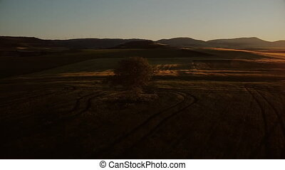 orbiter, coup, aérien, sunset., cinematic, arbre, solitaire