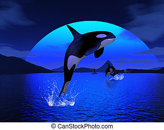 Orca 1 - orcawhale enjoy the freedom