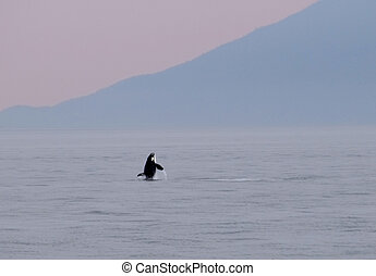 Orca 137