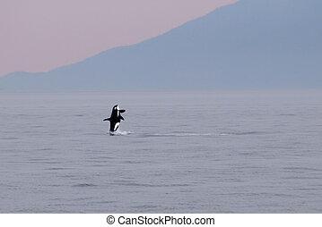 Orca 139