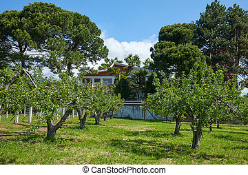 Orchard and house in a sunny summer day, Italy