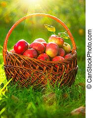 orchard., basket., mele, organico, giardino