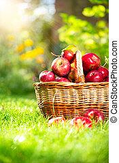 orchard., basket., pommes, organique, jardin