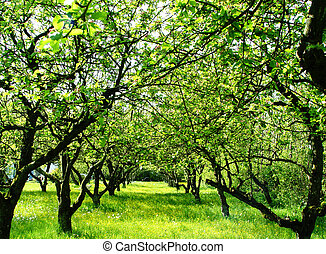 garden with apples and pearws in the afternoon sun