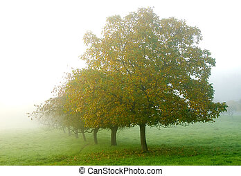 orchard in the mist