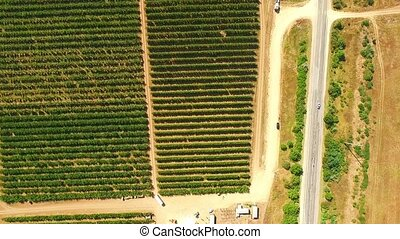 Orchard in the suburbs of France - Garden of fruit green...