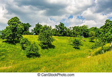 orchard on a hillside