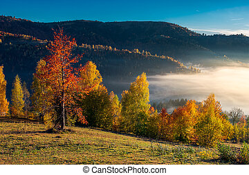 gorgeous morning light and fog in autumn - orchard on the...