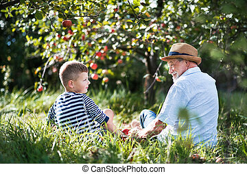 orchard., petit-fils, séance, grand-père, personne agee, herbe, vue postérieure
