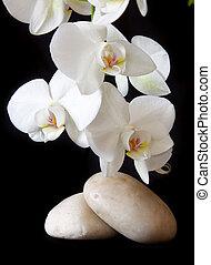orchid., マッサージ, 石