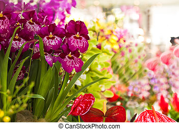 Orchid- and Anthuriumflowers