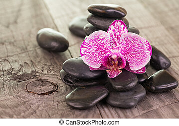 Orchid and black stones close-up