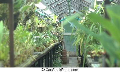 Orchid and other tropical flower sprouts in big greenhouse....