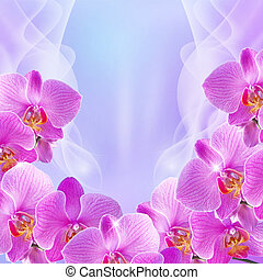 Orchid and stars - Orchid with transparent wawe