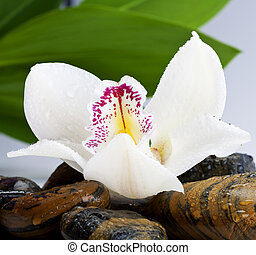 orchid and stone