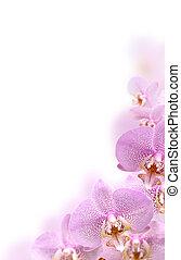 Orchid Border